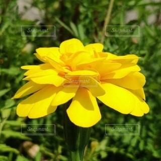花のクローズアップの写真・画像素材[3509729]