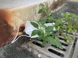 道に落ちているマスクの写真・画像素材[4281078]