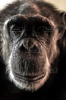 猿の写真・画像素材[143944]