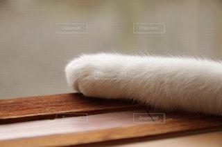 猫の写真・画像素材[144185]