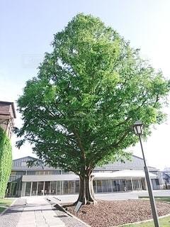 木のクローズアップの写真・画像素材[3435046]