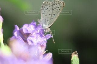 花のクローズアップの写真・画像素材[3423226]