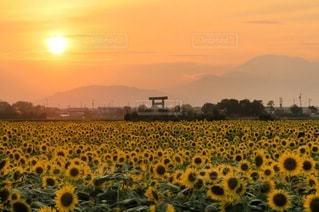 花畑のクローズアップの写真・画像素材[3430489]