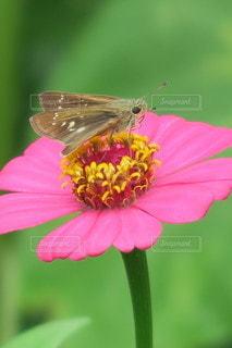 花と蝶々の写真・画像素材[3443073]