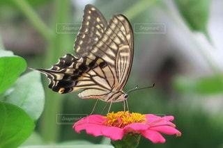 花に止まっている小鳥の写真・画像素材[3443094]