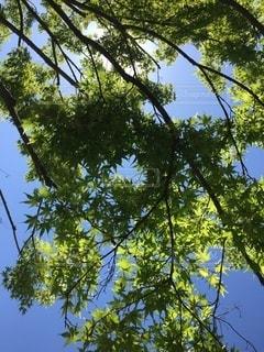 木のクローズアップの写真・画像素材[3433280]