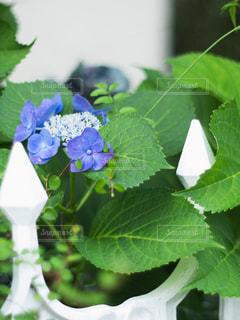 緑の植物のクローズアップの写真・画像素材[3424830]