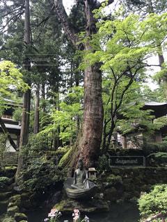 永平寺の風景の写真・画像素材[3476505]