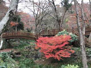 秋の色づく公園の写真・画像素材[3536884]