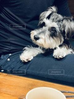 膝の上に座っている犬の写真・画像素材[3432015]