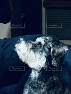 カメラを見ている犬 横顔の写真・画像素材[3432012]