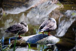 水の体の上に座っている鳥の写真・画像素材[4407245]