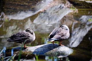 水の体の上に座っている鳥の写真・画像素材[4407243]
