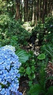 松林の写真・画像素材[3435547]