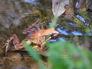 葉の上のカエルの写真・画像素材[4926647]