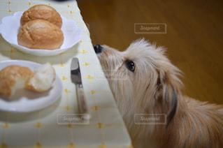 犬の写真・画像素材[147479]