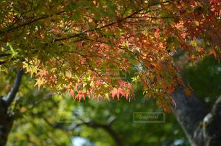 秋の写真・画像素材[147488]