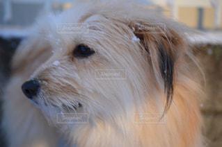犬の写真・画像素材[147659]