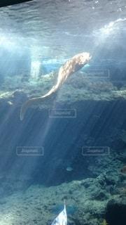 水の下で泳ぐ魚の写真・画像素材[3443714]