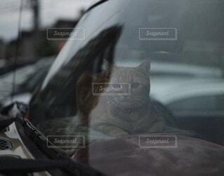 猫の写真・画像素材[3842389]