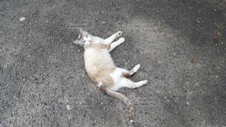 地面に横たわっている猫の写真・画像素材[3464468]