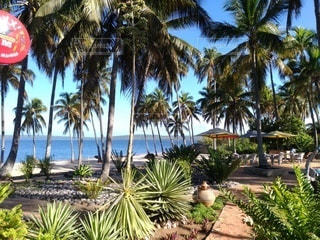 ヤシの木のあるビーチの写真・画像素材[3435906]