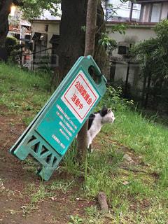 猫の写真・画像素材[145134]