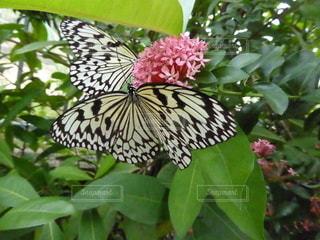 緑の植物の上に座っている鳥の写真・画像素材[3447132]