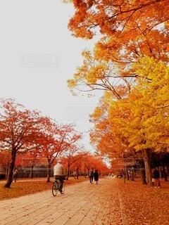 大阪城の紅葉の写真・画像素材[4703298]
