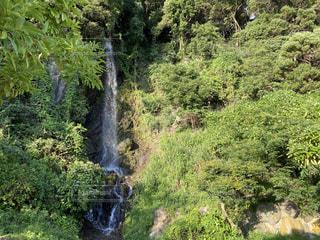 森の中にある大きな滝の写真・画像素材[3546108]