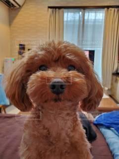 窓の前に座っている犬の写真・画像素材[3517713]