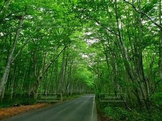 森林トンネルの写真・画像素材[3438995]