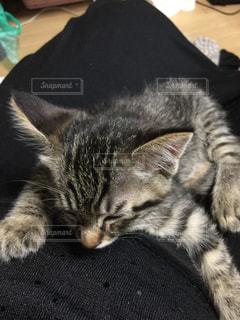 猫の写真・画像素材[145611]