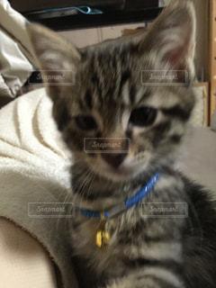 猫の写真・画像素材[145612]