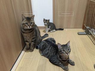 猫の写真・画像素材[145666]