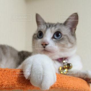 猫の写真・画像素材[146456]