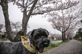 犬の写真・画像素材[146272]