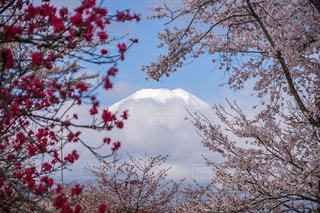 春の写真・画像素材[146545]