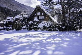 No.146616 雪