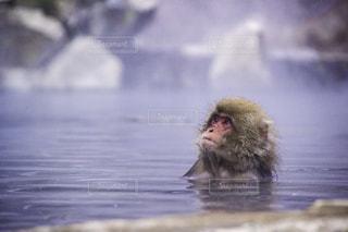猿の写真・画像素材[146629]