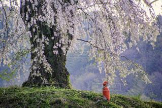 No.146686 桜