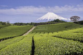 富士山 - No.146688