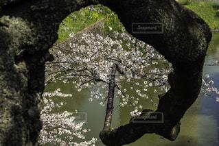 春 - No.146690