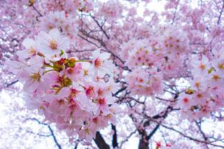 花の写真・画像素材[149249]
