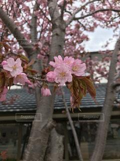 木の枝に花瓶の写真・画像素材[3446105]