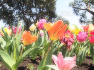 花の写真・画像素材[422937]
