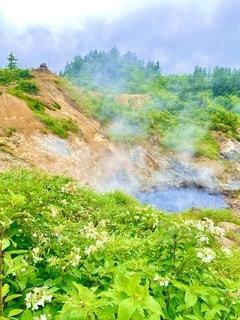 後生掛自然研究路、モクモクと立ち昇る湯煙と花の写真・画像素材[3558290]