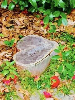 京都城南宮の落ち椿とハート型の切り株の写真・画像素材[3570941]