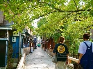 新緑が眩しい京都、白川の橋を渡るカップルの後ろ姿の写真・画像素材[3761725]