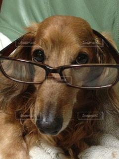 犬の写真・画像素材[146096]
